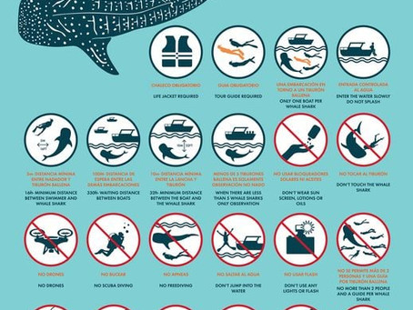 Cozumel Whale Shark Tour Rules...Not to be Broken