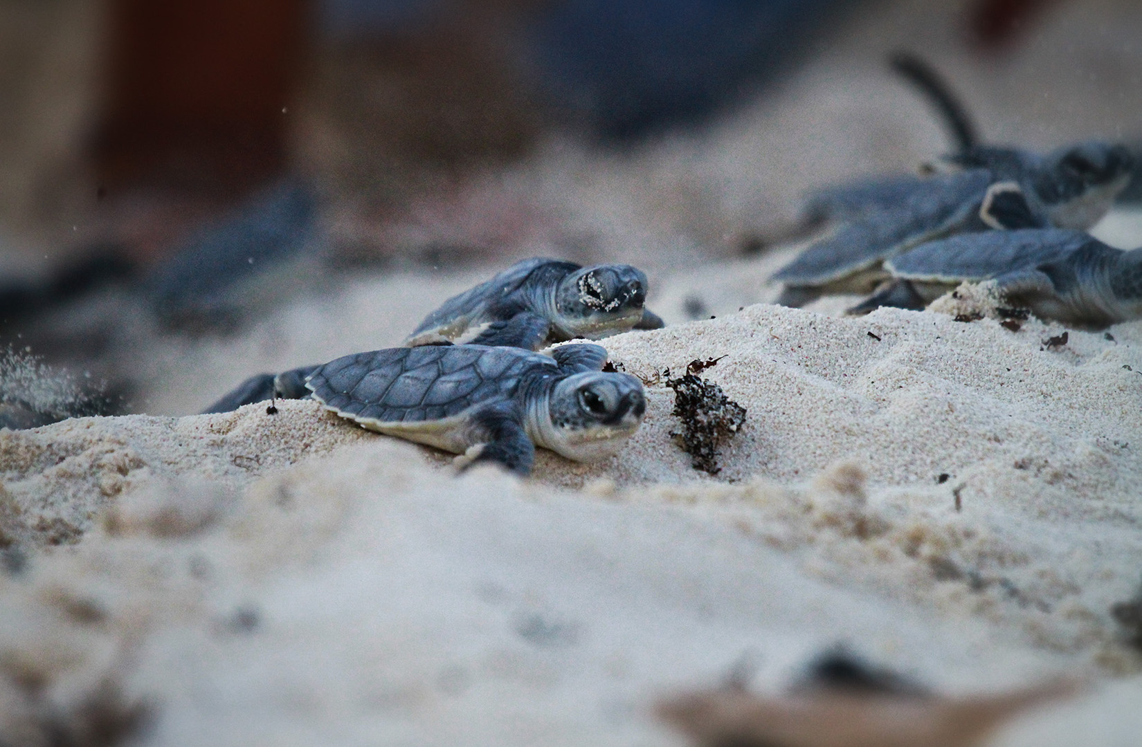 Cozumel Turtles Rescue