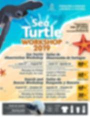 baby turtles programs.jpg
