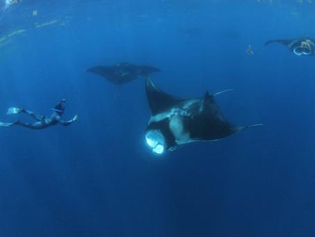 2021 Cozumel Whale Shark Tours