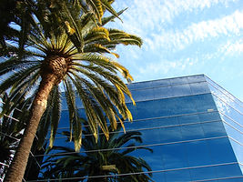 Palm Trees and Office Building Horizontal