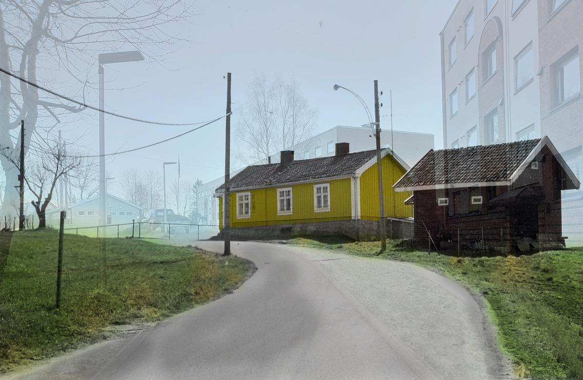 Gulestua-1964-2020_edited.png