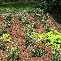 AbitaSpringsLibrary_raised bed1_4568 sq.