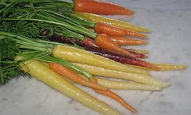 Carrots-Parsnips-Salsify rev.jpg