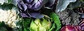 Brassicas-omex.jpg