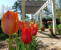 2019 Mar Apr Gardengoer Pic.png