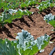 Irrigation-GoogleFreetoShare_edited.jpg