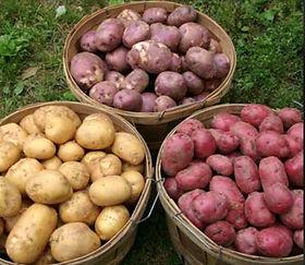 Potatoe Baskets.jpg