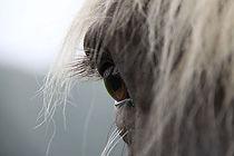 Therapie met paarden - Nieuws - Horse & Wisdom