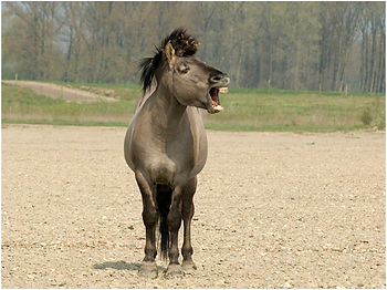 Therapie met paarden in Limburg
