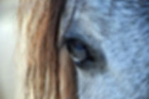 Coaching met paarden - eetstoornissen