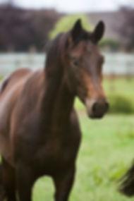 Therapie met paarden Limburg