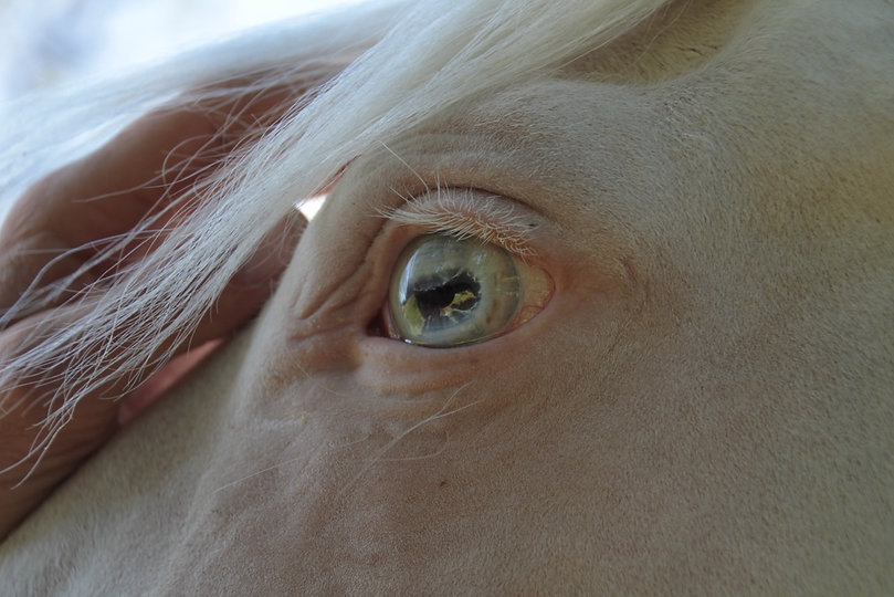 Horse and Wisdom - Therapie met paarden - Equine Assisted Therapy - Paarden - Autisme - Hulpverlening - Eetstoornissen - Horse - Therapy - Begeleiding - Limburg - Coaching - Spiegelen - Pony Power voor Kids