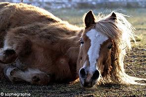 Spiegelen met paarden - autisme - Pony Power voor Kids