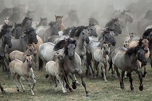 Horse and Wisdom - Therapie met paarden - Equine Assisted Therapy - Paarden - Autisme - Hulpverlening - Eetstoornissen - Horse - Therapy - Limburg - Coaching - Spiegelen - Pony Power voor Kids