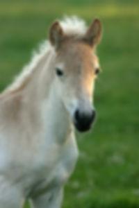 Horse and Wisdom - Limburg