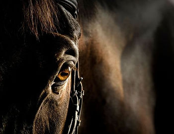 Horse and Wisdom - Therapie met paarden - Equine Assisted Therapy - Paarden - Autisme - Hulpverlening - Eetstoornissen - Horse - Therapy - Limburg - Coaching - Spiegelen