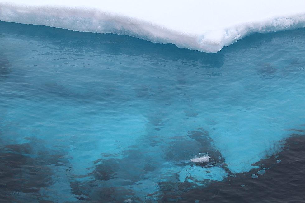 blue-arctic-ice-clear-water_noaa_3000.jp