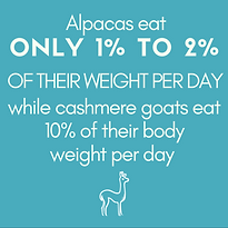 Alpacas+eat+ONLY+1%+TO+2%+OF+THEIR+WEIGH