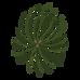 Kiefer Fichte Zweige 3