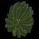 Ramos de pinheiro 3 Spruce