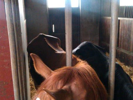 Police raid Byrialsen's Danish farm