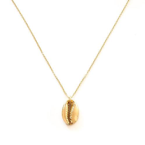 Big shell gold