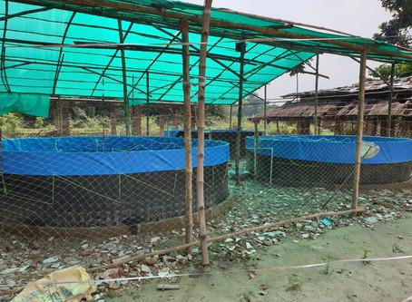 Complete Guidance on Biofloc Fish Farm