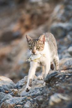 Cat and fish in Cuschadasi