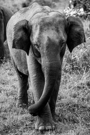National Park around Sigiriya