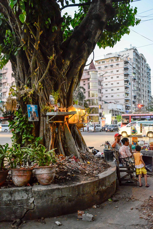 Alter Geister-Baum, mitten in Yangon