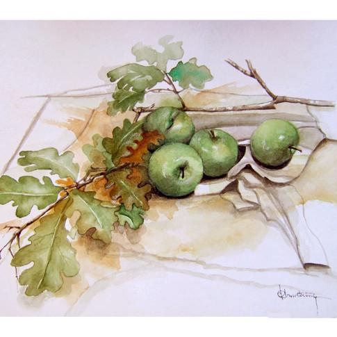 Apple Branch Study