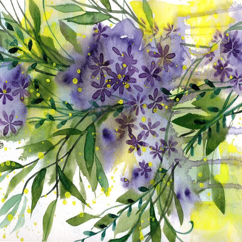 Summer Violets.jpg