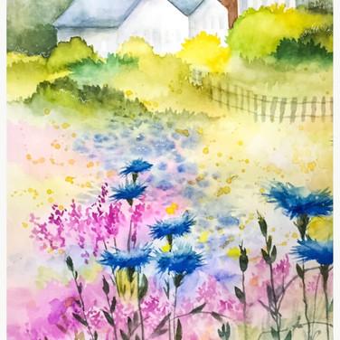 Cornflowers and Loosestrife.jpg
