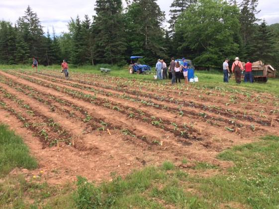 2020 Planting Crew