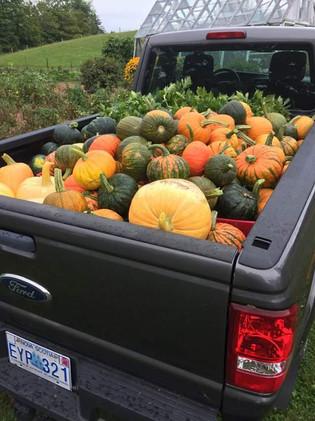 2108 Harvest