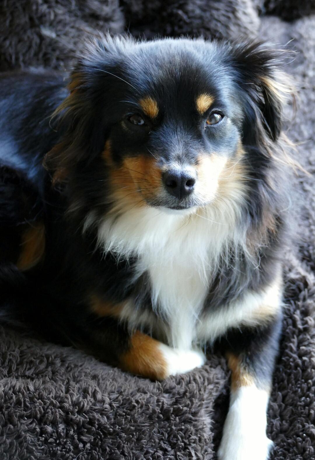 Ellie 16 months