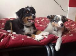 Kaiser and his new BC sister