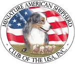 Mini Aussies, Mini American Shepherd, Miniature American Shepherd, Miniature Australian Shepherd, Mini Australian Shepherd, Mini Aussie, Mini American, Puppy, Puppies, Starrytails, Miniature American Shepherds, Miniature Australian Shepherds, UK, England