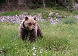 Foto orso Stefano Tribuzi.jpg