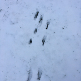 Mystery footprints in the snow