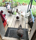 Our newbie chickens have settled in well...