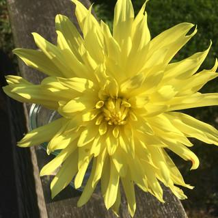 The garden is full of sunshine colours......