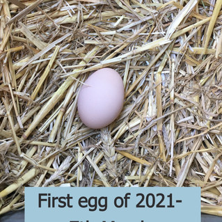 yeay first egg of 2021