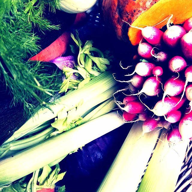 Manger des légumes biologiques de saison