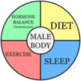 Testosterone Wheel-V2.jpg
