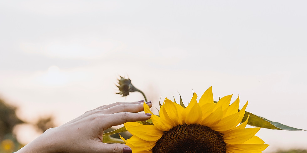 6:30 pm, Aug 31st - Richmond Sunflower Viewing