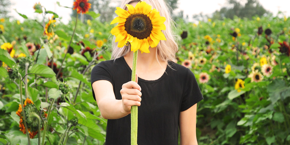 9:00 am, Sep 13th - Richmond Sunflower Viewing