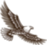 SC Logo Eagle Plain 1.png