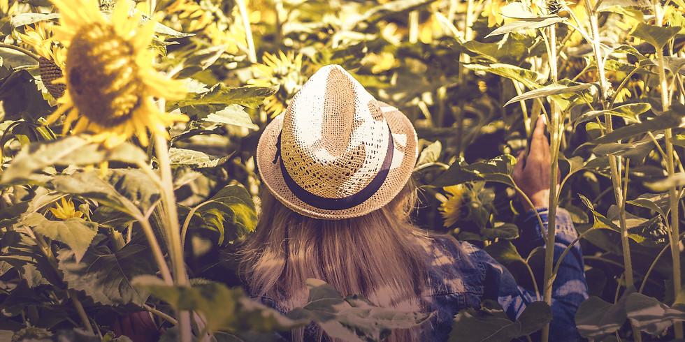 7:00 pm, Aug 24th - Richmond Sunflower Viewing